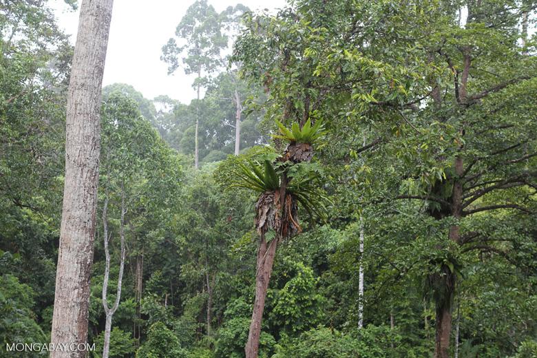 Borneo rainforest -- sabah_4143