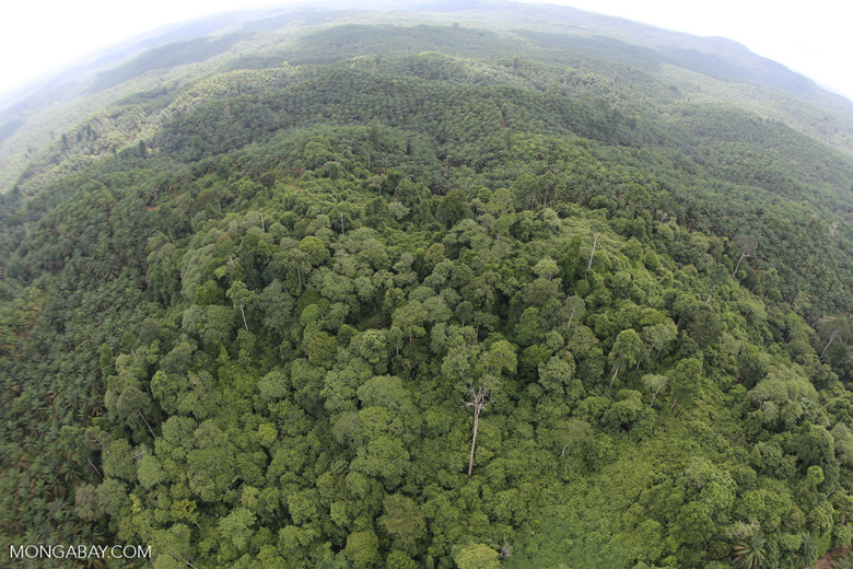 Oil palm plantation and rainforest in Borneo -- sabah_aerial_0004