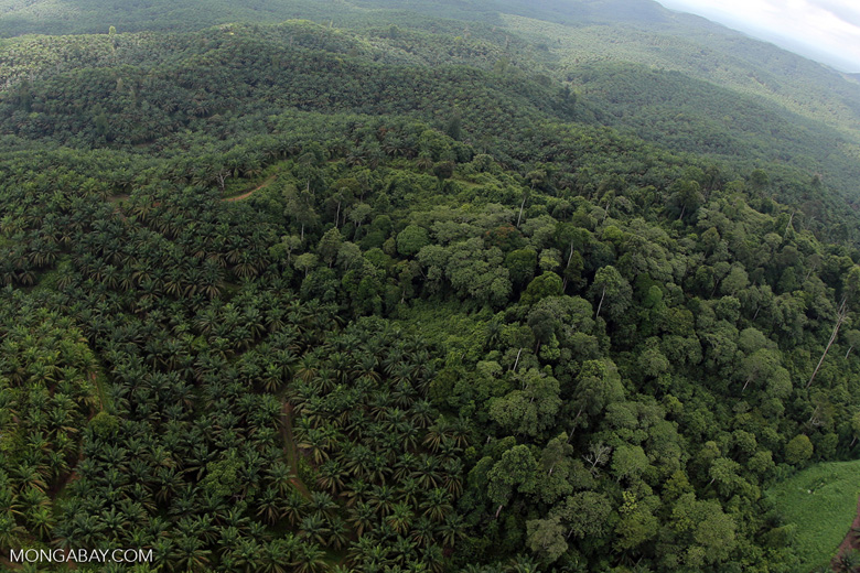 Oil palm plantation and rainforest in Borneo -- sabah_aerial_0011