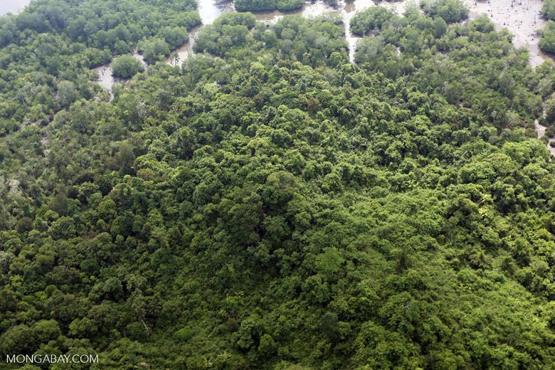 Logged over forest in Borneo -- sabah_aerial_0060