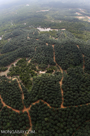 Oil palm plantation and mangroves in Borneo -- sabah_aerial_0069