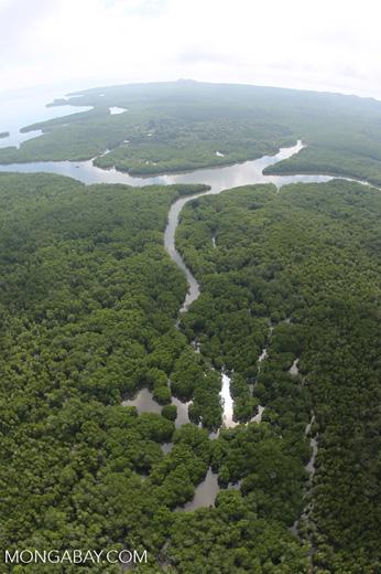 Aerial view of a Borneo mangrove forest -- sabah_aerial_0073
