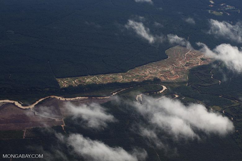 Deforestation in Borneo -- sabah_aerial_0157