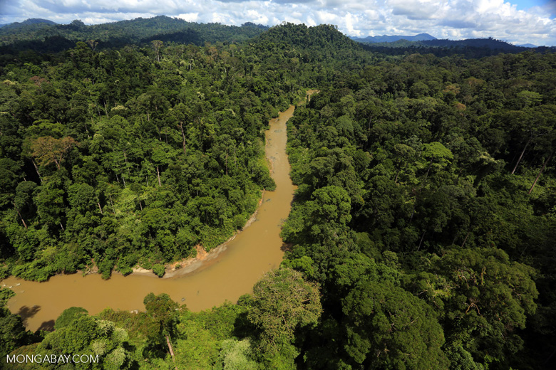 Borneo rainforest river