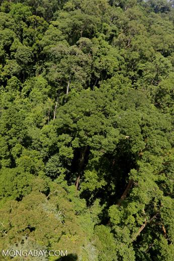 Rainforest in Borneo -- sabah_aerial_0189