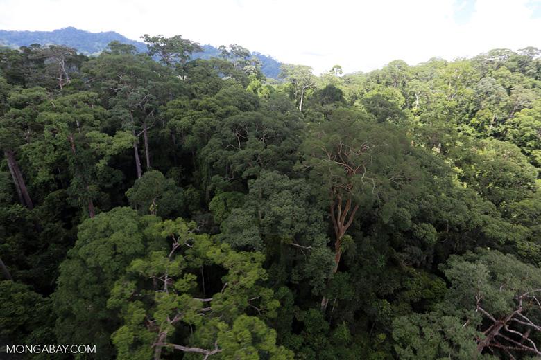 Rainforest in Borneo -- sabah_aerial_0195