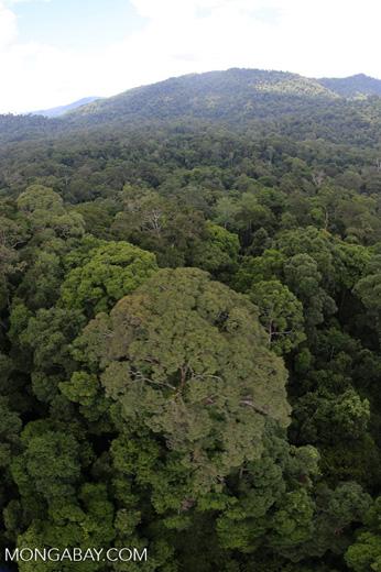 Rainforest in Borneo -- sabah_aerial_0226