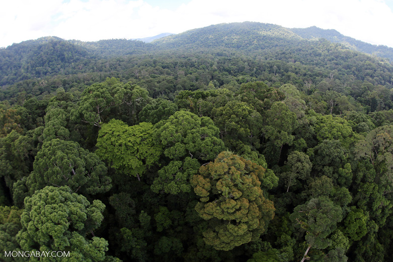 Rainforest in Borneo -- sabah_aerial_0227