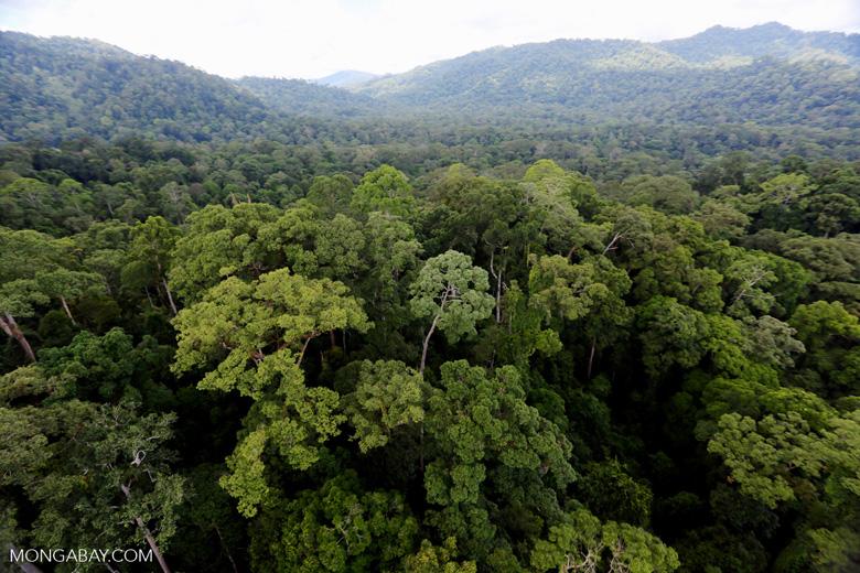 Rainforest in Borneo -- sabah_aerial_0235
