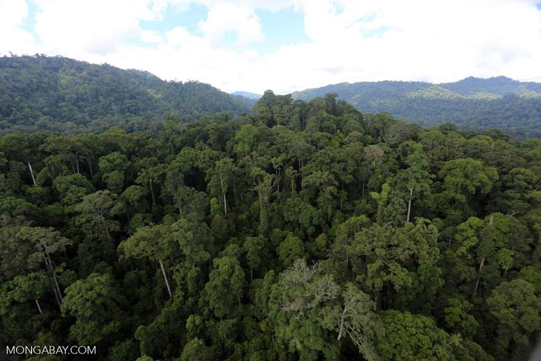 Rainforest in Borneo -- sabah_aerial_0258