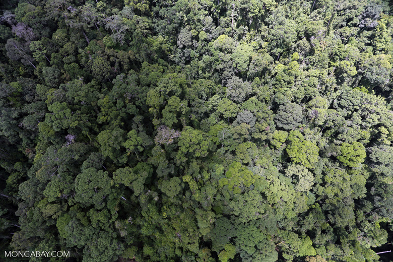 Rainforest in Borneo -- sabah_aerial_0330