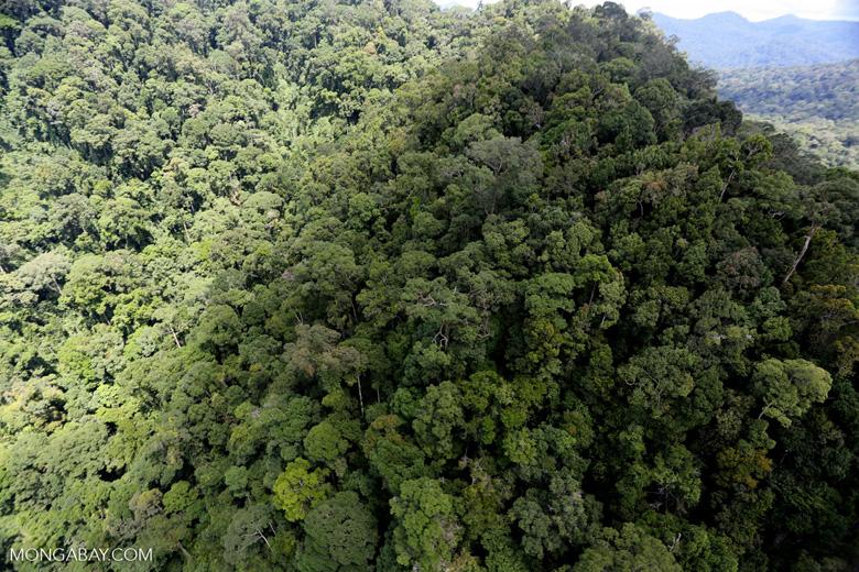 Rainforest in Borneo -- sabah_aerial_0348