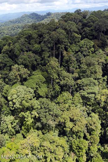 Rainforest in Borneo -- sabah_aerial_0360