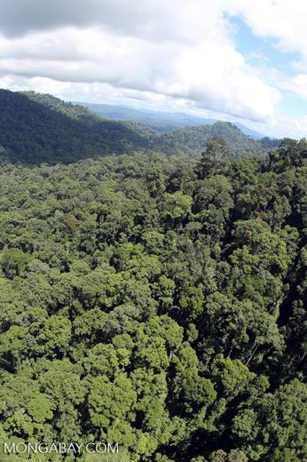Rainforest in Borneo -- sabah_aerial_0369