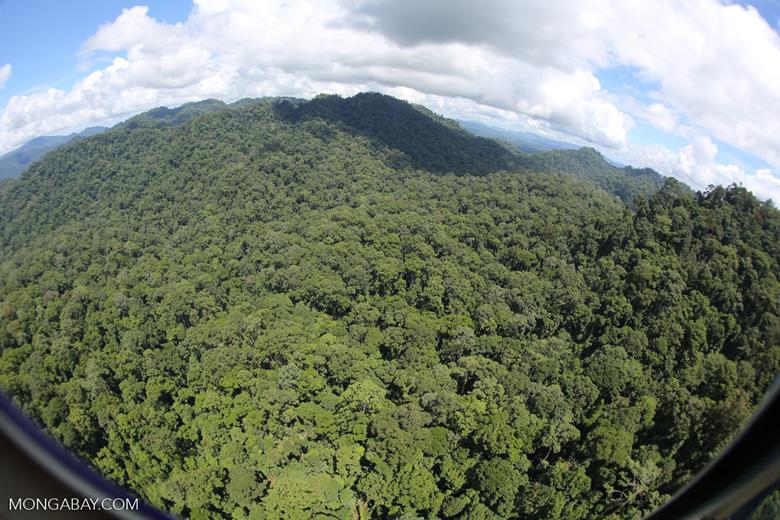Rainforest in Borneo -- sabah_aerial_0372