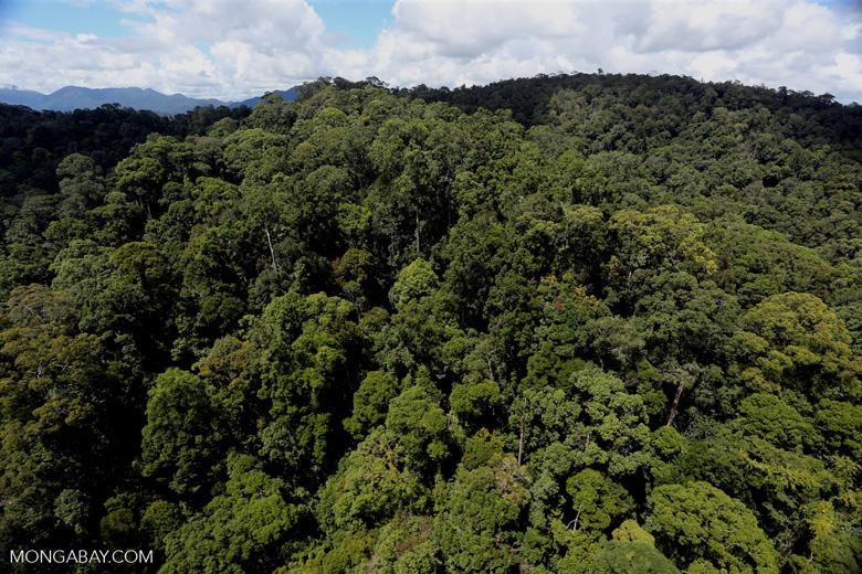 Rainforest in Borneo -- sabah_aerial_0391