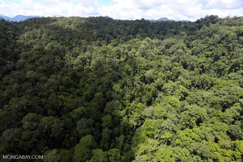 Rainforest in Borneo -- sabah_aerial_0395
