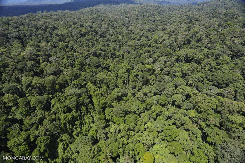 Rainforest in Borneo -- sabah_aerial_0410