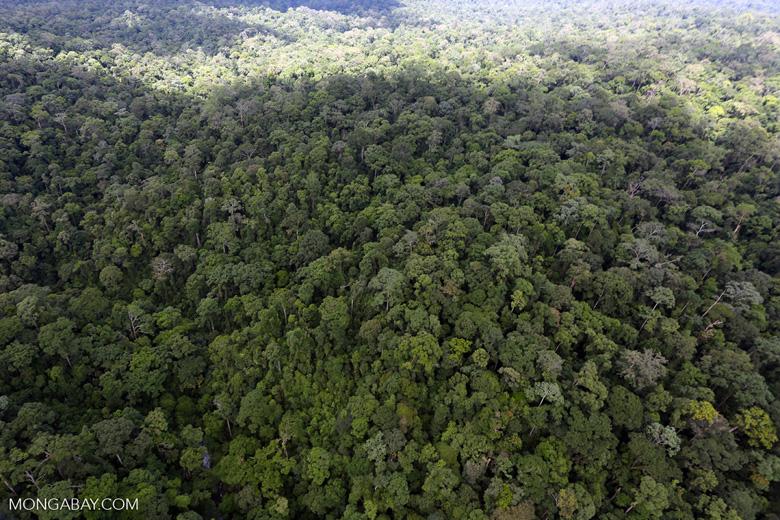 Rainforest in Borneo -- sabah_aerial_0427
