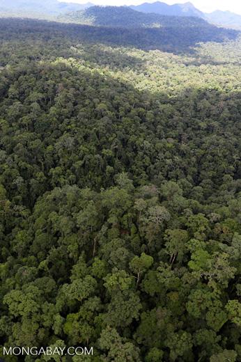 Rainforest in Borneo -- sabah_aerial_0433