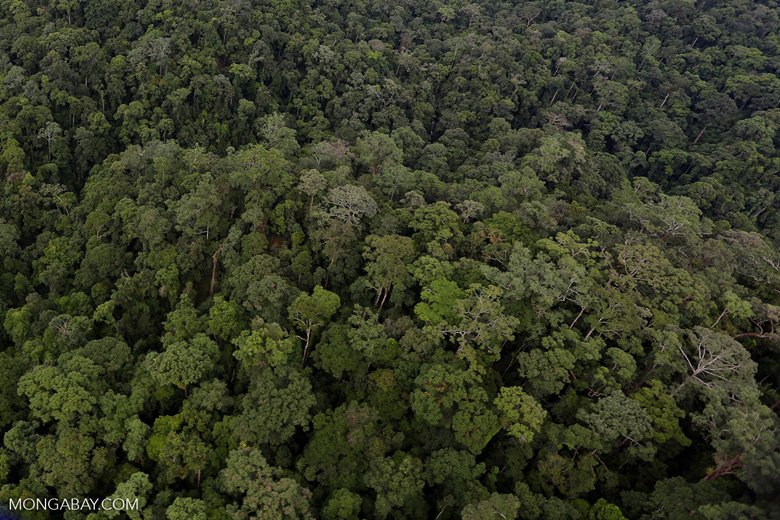 Rainforest in Borneo -- sabah_aerial_0434