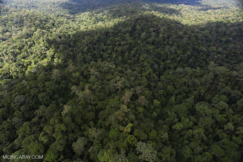 Rainforest in Borneo -- sabah_aerial_0435