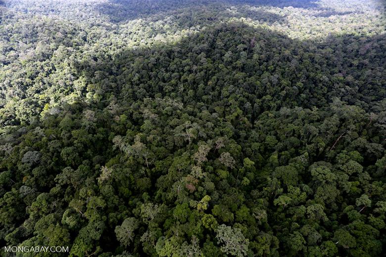 Rainforest in Borneo -- sabah_aerial_0436