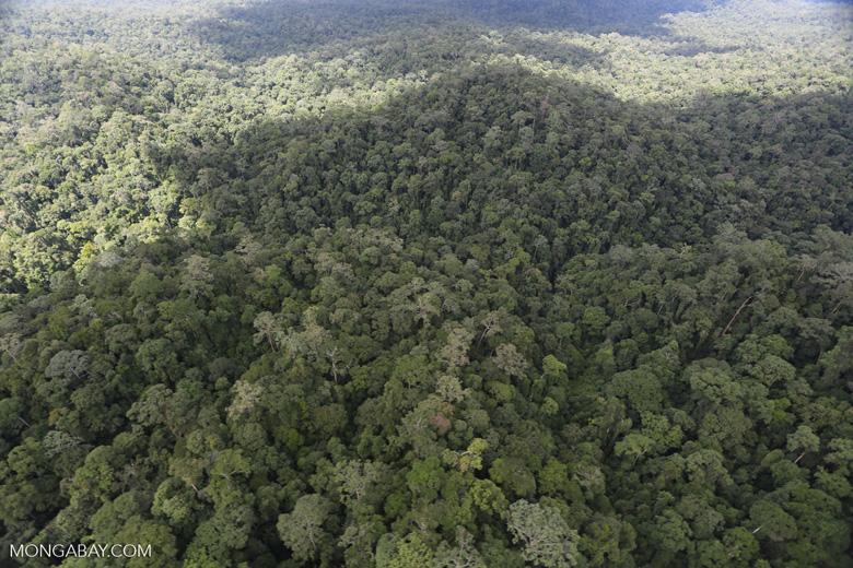 Rainforest in Borneo -- sabah_aerial_0440