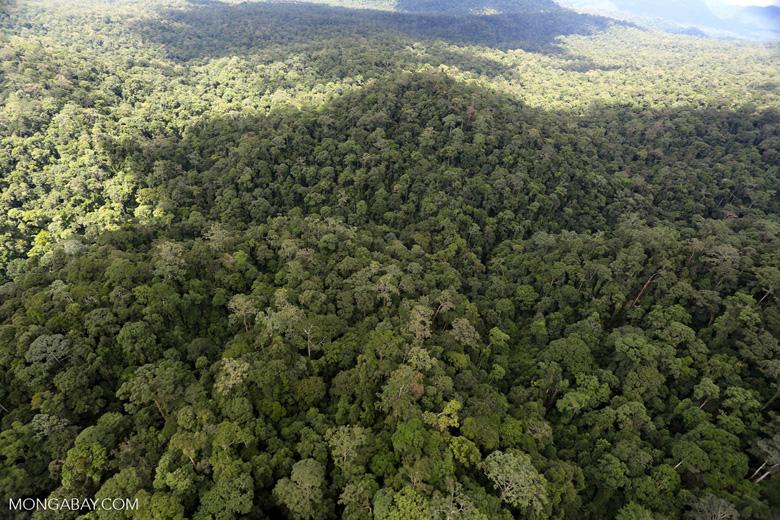 Rainforest in Borneo -- sabah_aerial_0442