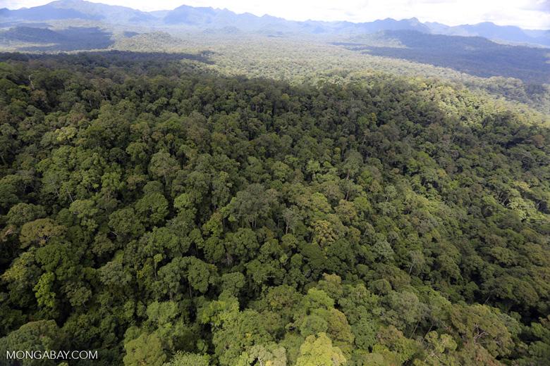 Rainforest in Borneo -- sabah_aerial_0452