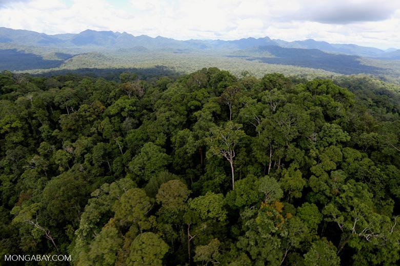 Rainforest in Borneo -- sabah_aerial_0458