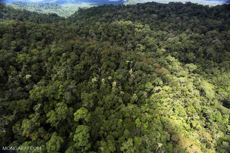 Rainforest in Borneo -- sabah_aerial_0468
