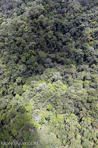 Rainforest in Borneo -- sabah_aerial_0477