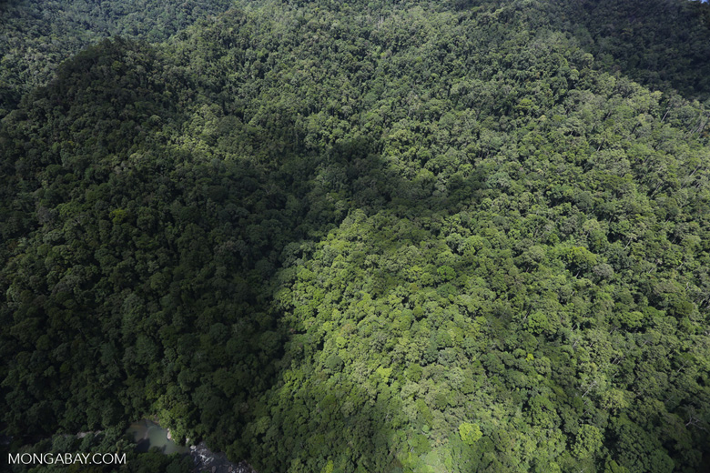 Rainforest in Borneo -- sabah_aerial_0481