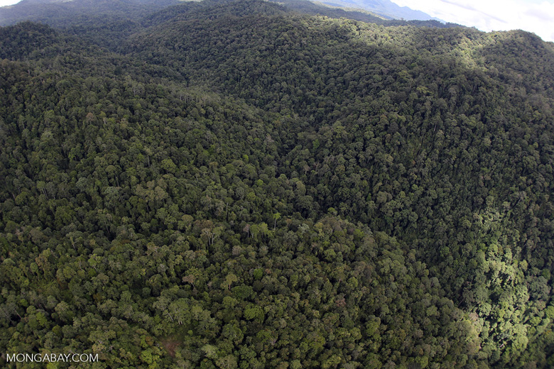 Rainforest in Borneo -- sabah_aerial_0503