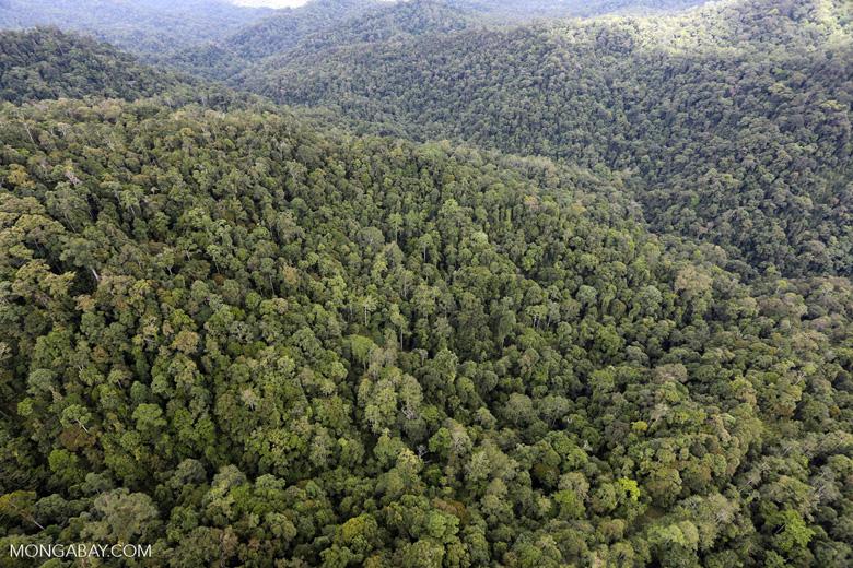 Rainforest in Borneo -- sabah_aerial_0506