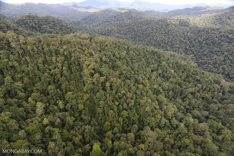 Rainforest in Borneo -- sabah_aerial_0511