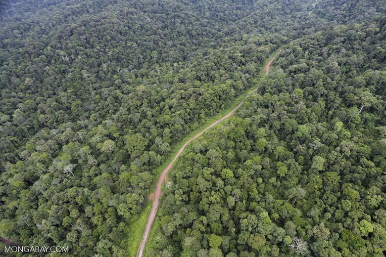 Logging road in Borneo -- sabah_aerial_0528