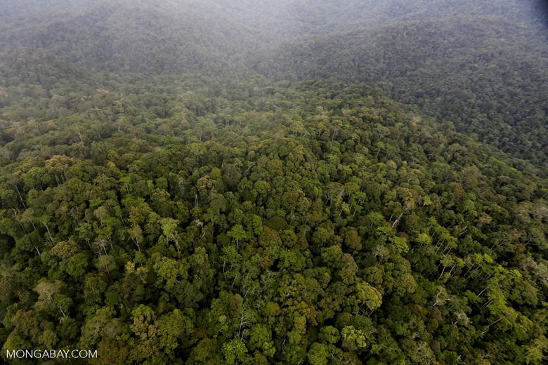 Rainforest in Borneo -- sabah_aerial_0533
