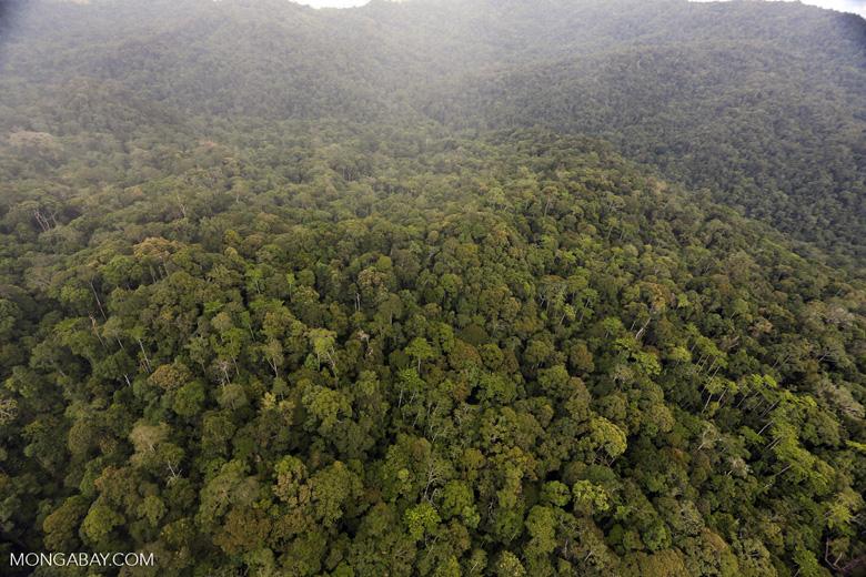 Rainforest in Borneo -- sabah_aerial_0534