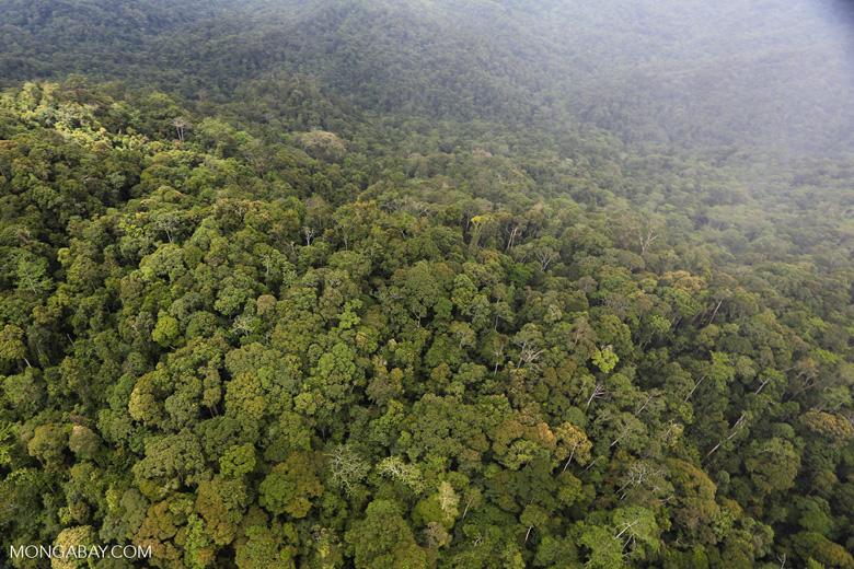 Rainforest in Borneo -- sabah_aerial_0542