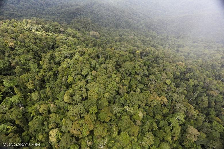 Rainforest in Borneo -- sabah_aerial_0544