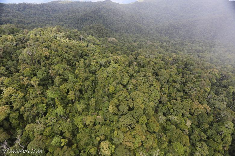 Rainforest in Borneo -- sabah_aerial_0550
