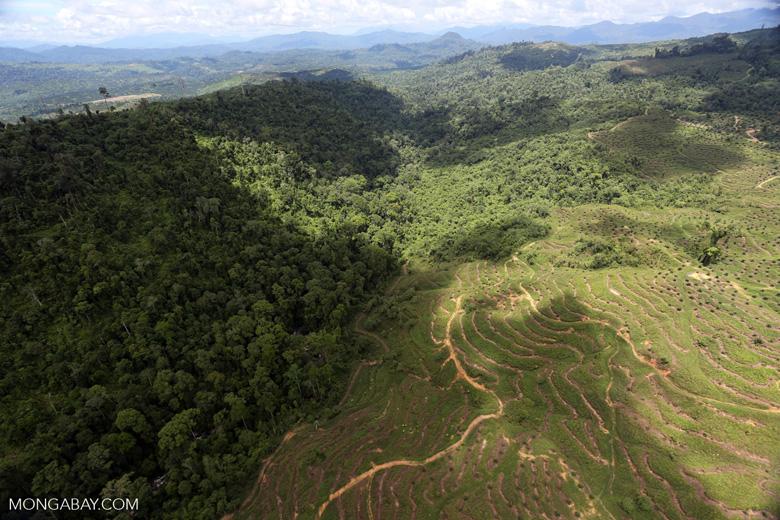 Deforestation for palm oil in Borneo -- sabah_aerial_0573