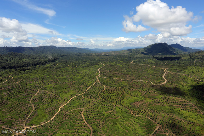 Forest and oil palm plantations in Borneo