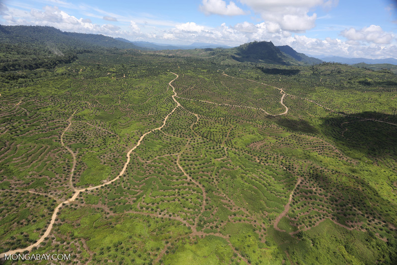 Forest and oil palm plantations in Borneo -- sabah_aerial_0618