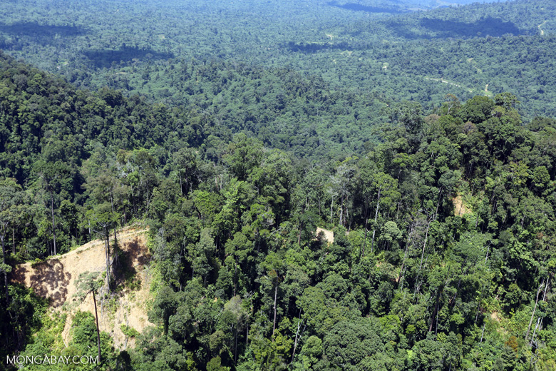 Heavily logged forest in Borneo -- sabah_aerial_0631