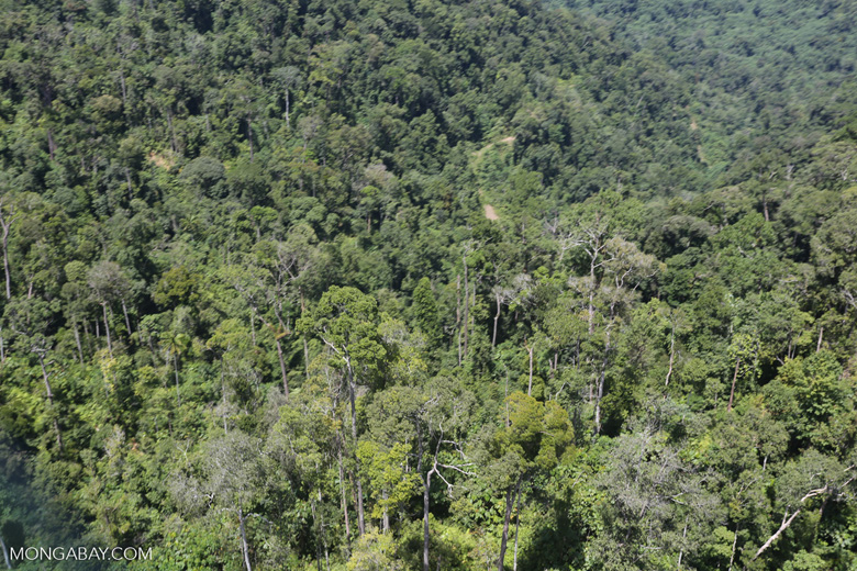 Heavily logged forest in Borneo -- sabah_aerial_0633
