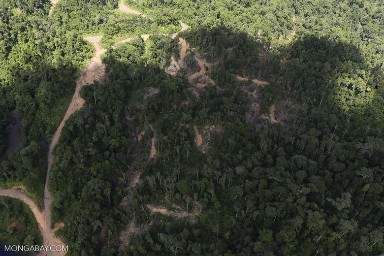 Heavily logged forest in Borneo -- sabah_aerial_0640