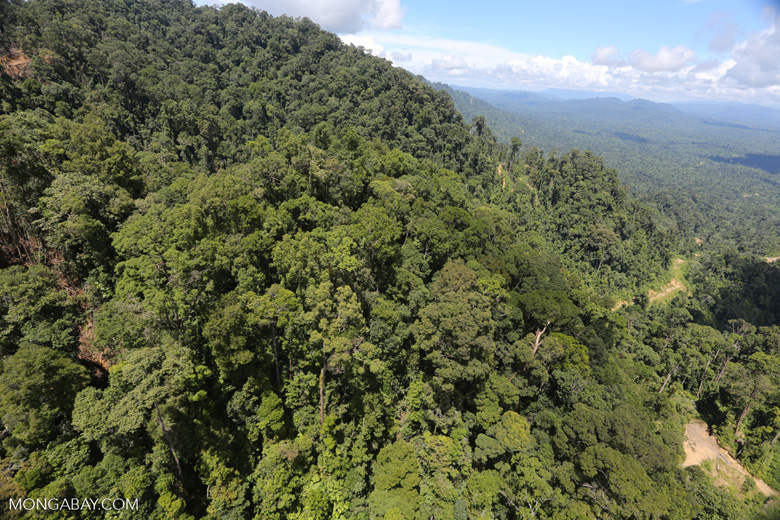 Logging road in Borneo -- sabah_aerial_0648